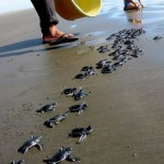 turtle hatchery for website