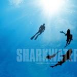 shark water for website